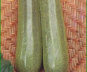 Семена кабачков для выращивания плодородного урожая